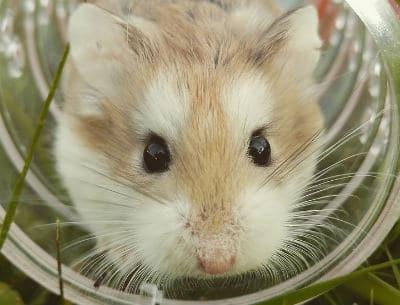 silent hamster wheel