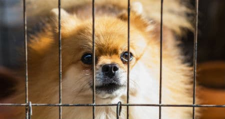 how soundproof dog kennel