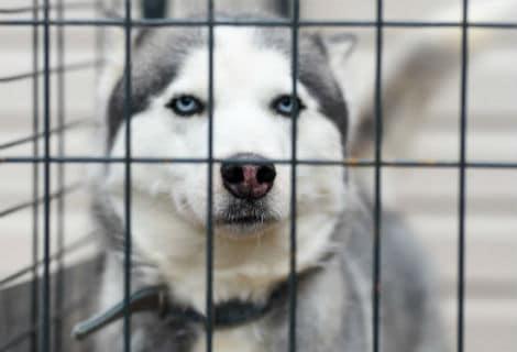 sound reducing pet cage