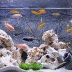 Quietest Fish Tank Filter